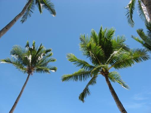 palmtreez.jpg